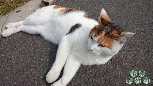 エギング 猫